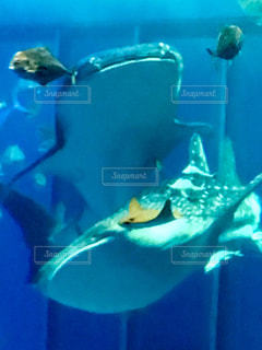 美ら海水族館の写真・画像素材[347088]