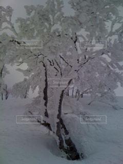 冬の写真・画像素材[344514]
