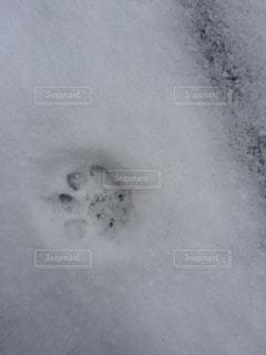 猫の写真・画像素材[351487]