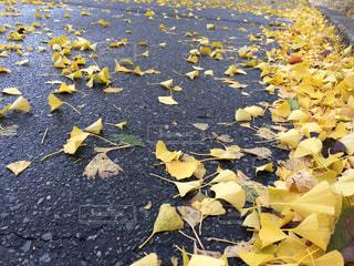 秋の写真・画像素材[360765]