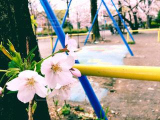 公園の写真・画像素材[418841]