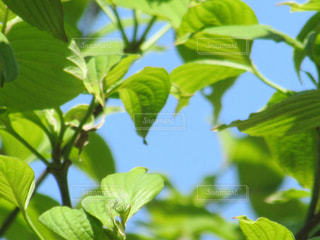 緑の写真・画像素材[445162]