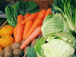 野菜の写真・画像素材[445167]