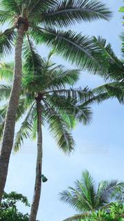 ヤシの木のあるビーチの写真・画像素材[2901600]