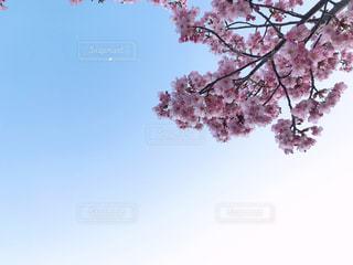 春の訪れの写真・画像素材[1080374]