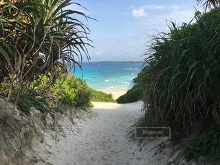 ヤシの木と水の体を持つビーチ - No.707603