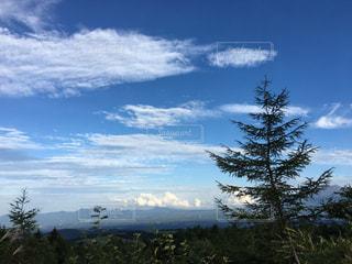 青い空と雲とツリーの写真・画像素材[708109]