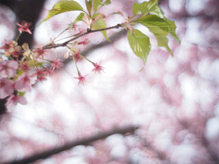 春 - No.361230