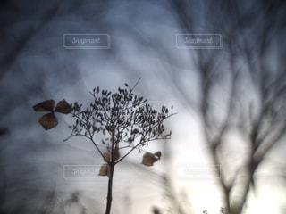 冬の写真・画像素材[401139]