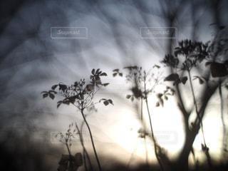 冬の写真・画像素材[401140]