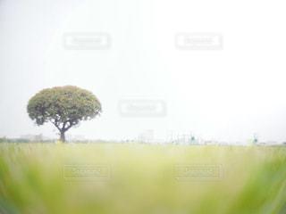 近くの木のアップ - No.1003010
