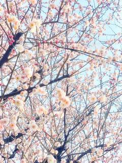 近くの木のアップ - No.1010419