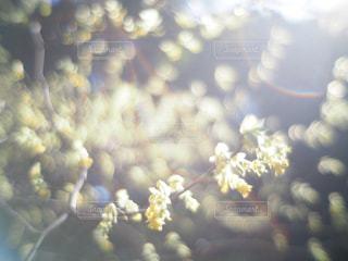 近くに花のアップ - No.1010485