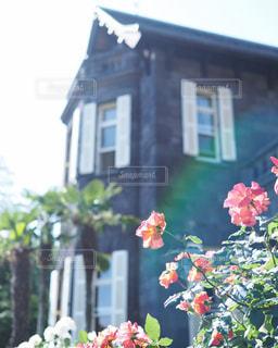 近くの花のアップの写真・画像素材[1210539]