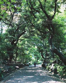 フォレスト内のツリー - No.1210540