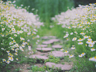 花園のクローズアップの写真・画像素材[2375767]