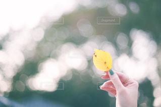 落ち葉のクローズアップの写真・画像素材[2770991]