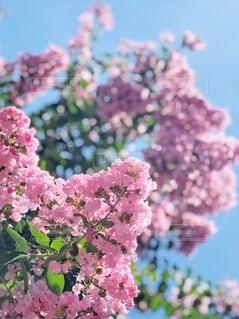 植物の上のピンクの花のクローズアップの写真・画像素材[3645442]