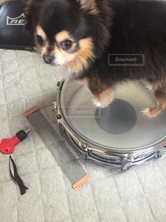 犬の写真・画像素材[344713]