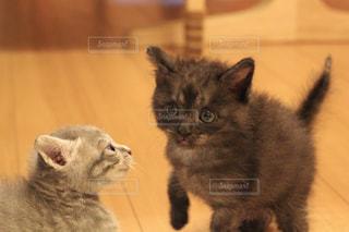 動物の写真・画像素材[559094]