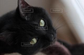 動物の写真・画像素材[559100]