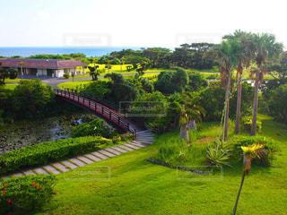沖縄の写真・画像素材[349731]