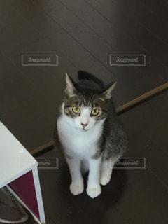 猫の写真・画像素材[344896]