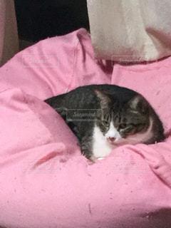 猫の写真・画像素材[344901]