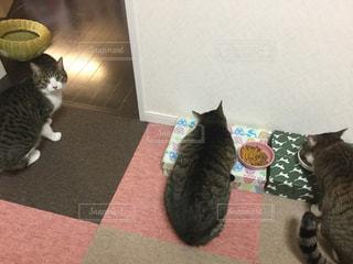 猫の写真・画像素材[344904]
