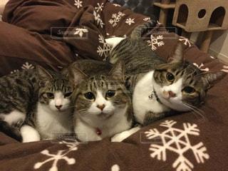猫の写真・画像素材[344920]