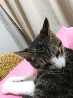 猫の写真・画像素材[344922]
