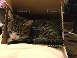 猫の写真・画像素材[344929]