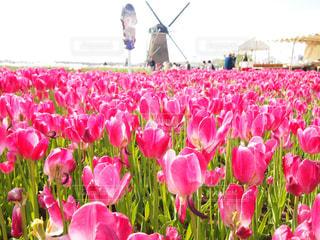 花の写真・画像素材[346792]