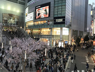 春の写真・画像素材[388836]