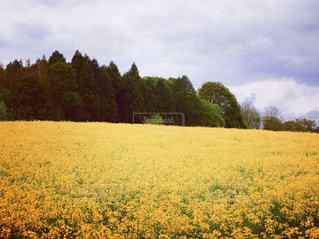 春の写真・画像素材[460096]