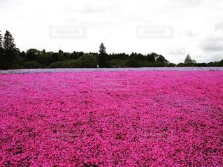 春の写真・画像素材[460097]