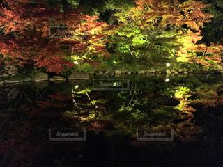 水面の紅葉の写真・画像素材[2359482]