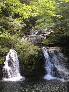 双龍の滝の写真・画像素材[2359489]