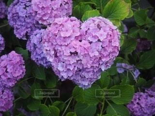 花のクローズアップの写真・画像素材[4148311]