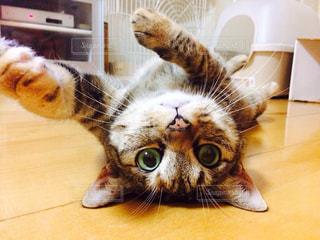 猫の写真・画像素材[345318]