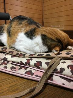 猫の写真・画像素材[345322]