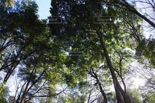 自然の写真・画像素材[347338]