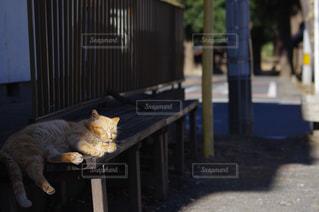 猫の写真・画像素材[347342]