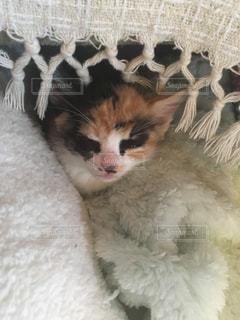 猫の写真・画像素材[345471]