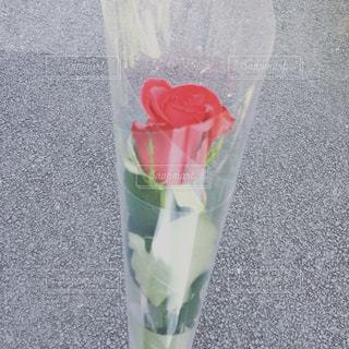 花の写真・画像素材[493226]