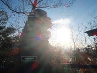 木のぼやけた写真の写真・画像素材[1674419]