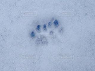 猫かな犬かな⁉の写真・画像素材[345440]