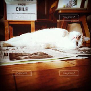 猫あるある、新聞ひろげると…の写真・画像素材[345489]