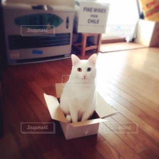 猫届きましたの写真・画像素材[346005]