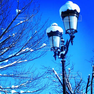 ドカ雪の写真・画像素材[360020]
